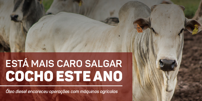 https://www.scotconsultoria.com.br/bancoImagensUP/180131-carta-insumos-1.jpg