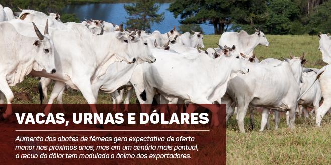 https://www.scotconsultoria.com.br/bancoImagensUP/181010_Imagem_Carta_Boi_nm.jpg